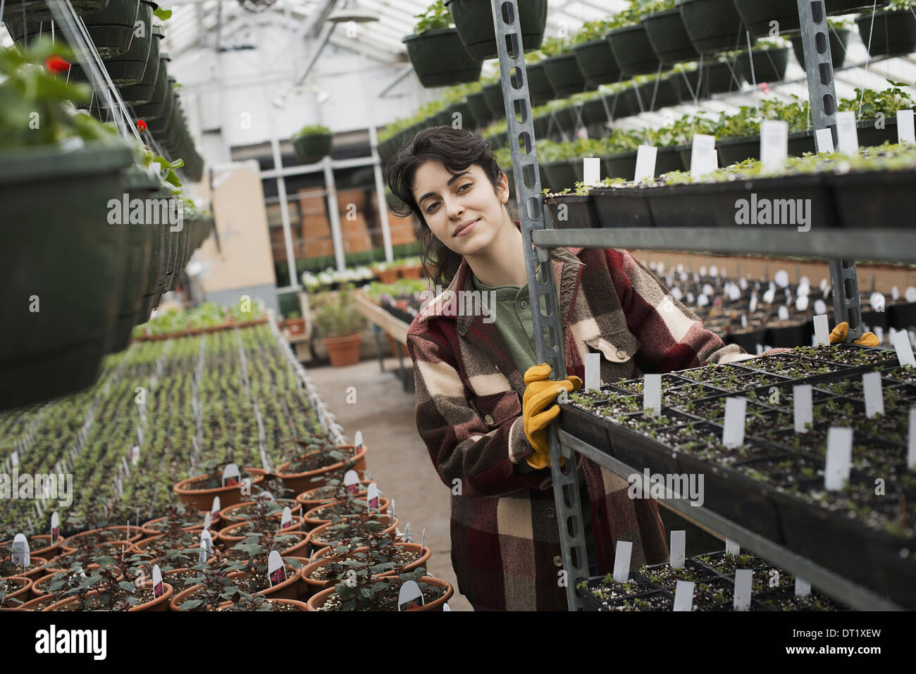 A woman pushing a trolley of seed trays with labels - Stock Image