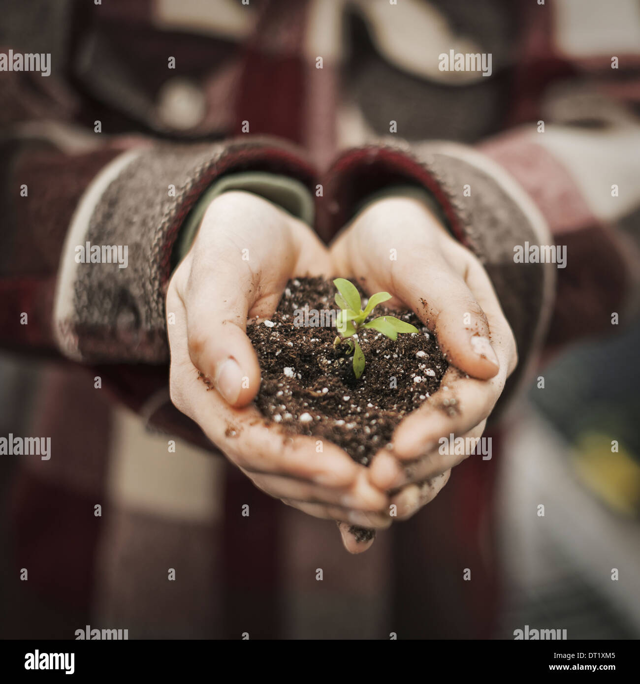 A person in a commercial glasshouse holding a small plant seedling in soil in her cupped hands - Stock Image