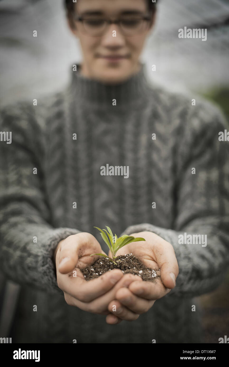 A person in a commercial glasshouse holding a small plant seedling in his cupped hands - Stock Image