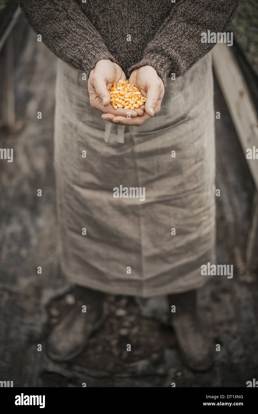 Spring Planting A man holding a handful of plant seeds in his cupped hands - Stock Image