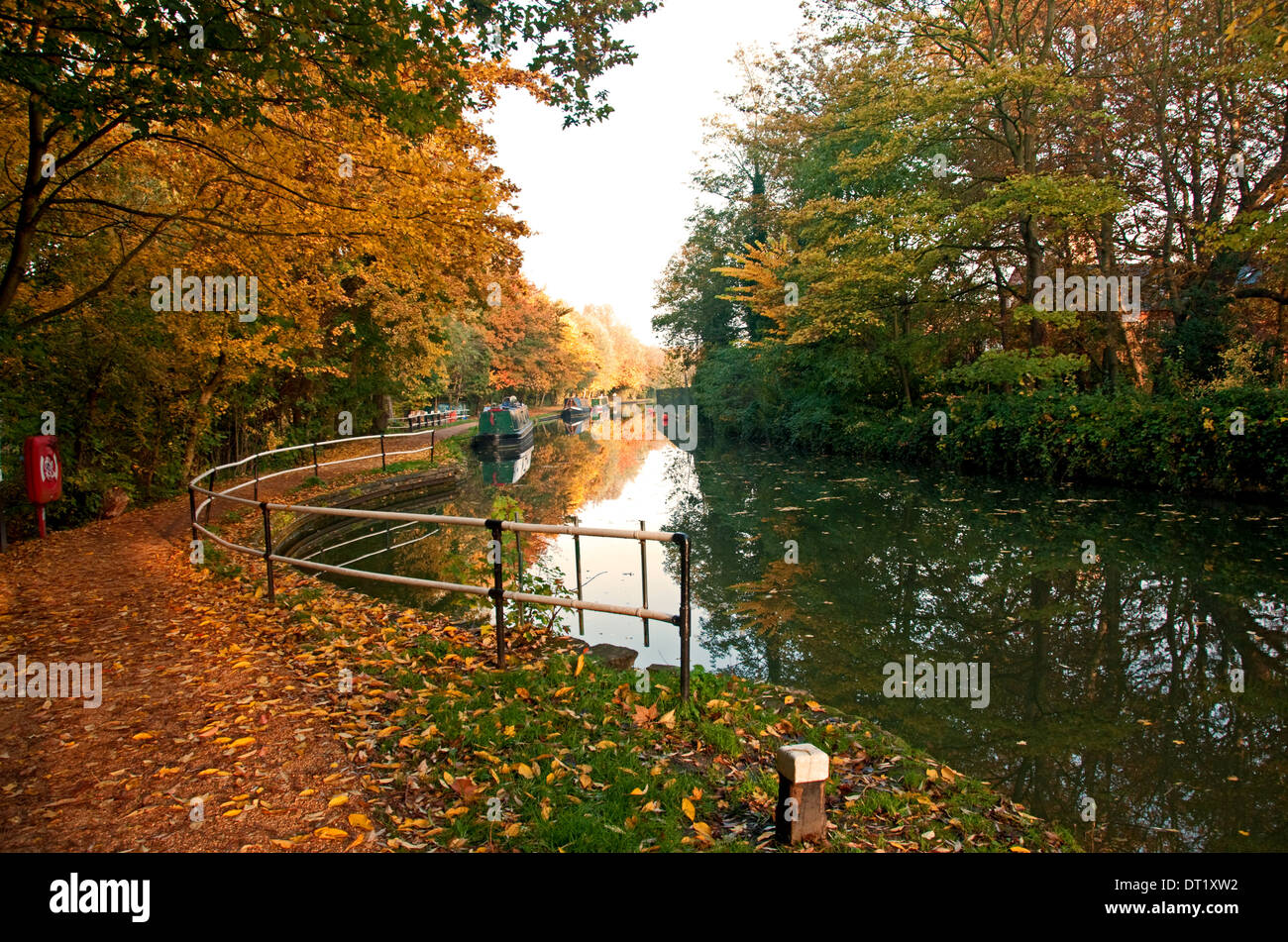 Autumn trees, Oxford Canal - Stock Image