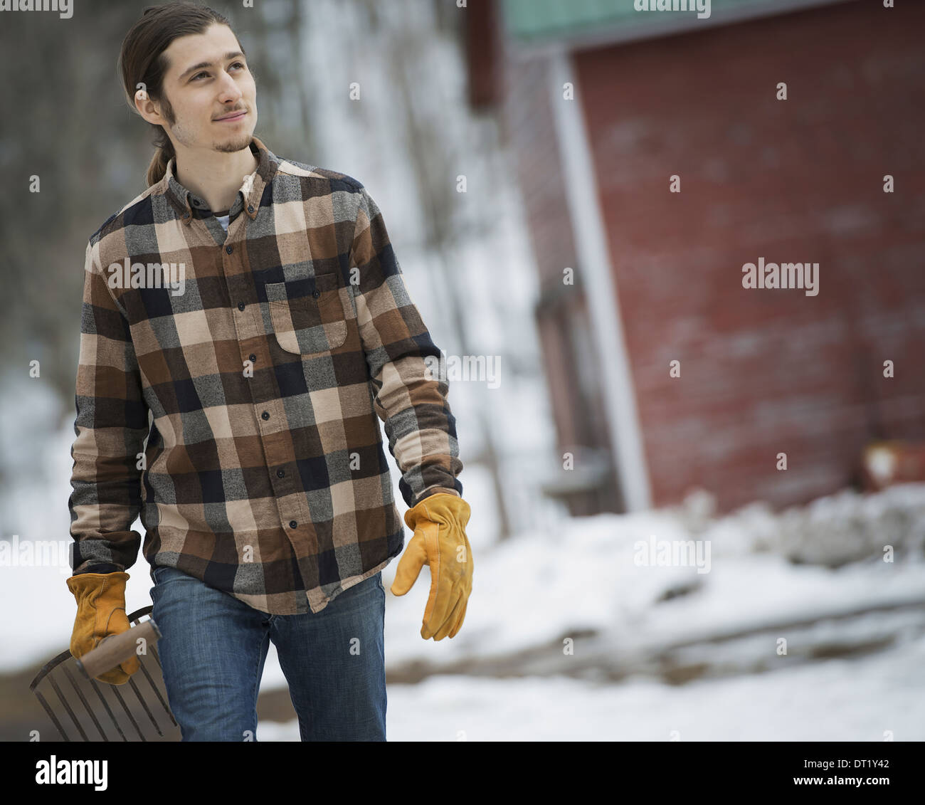 An organic farm in winter in New York State USA A man in a plaid shirt walking across snow-covered ground - Stock Image