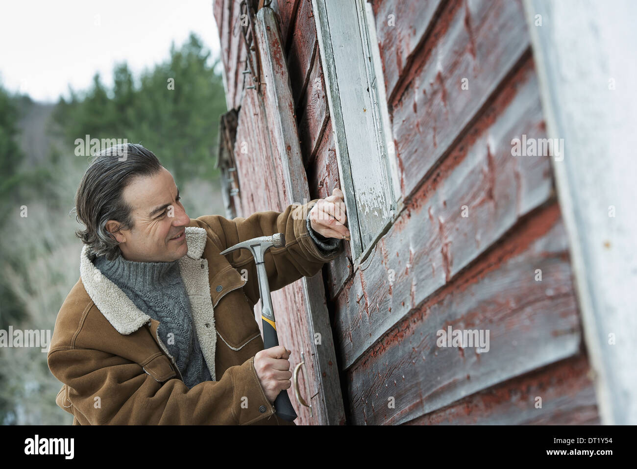 An organic farm in winter in New York State USA A man repairing a barn hammering nails into wooden shingle - Stock Image