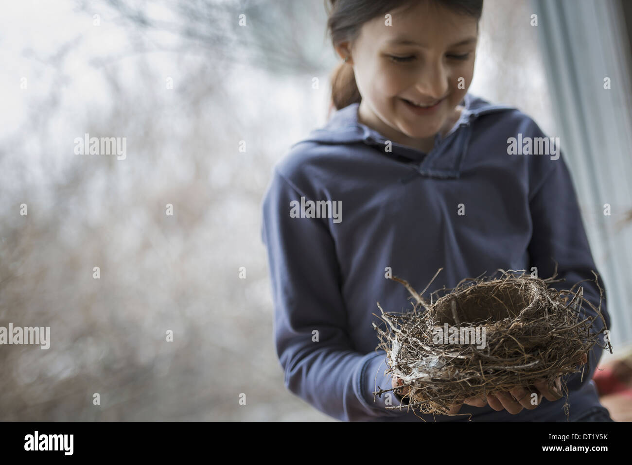 An organic farm in winter in New York State USA A young girl holding a bird's nest woven from twigs and leaves - Stock Image