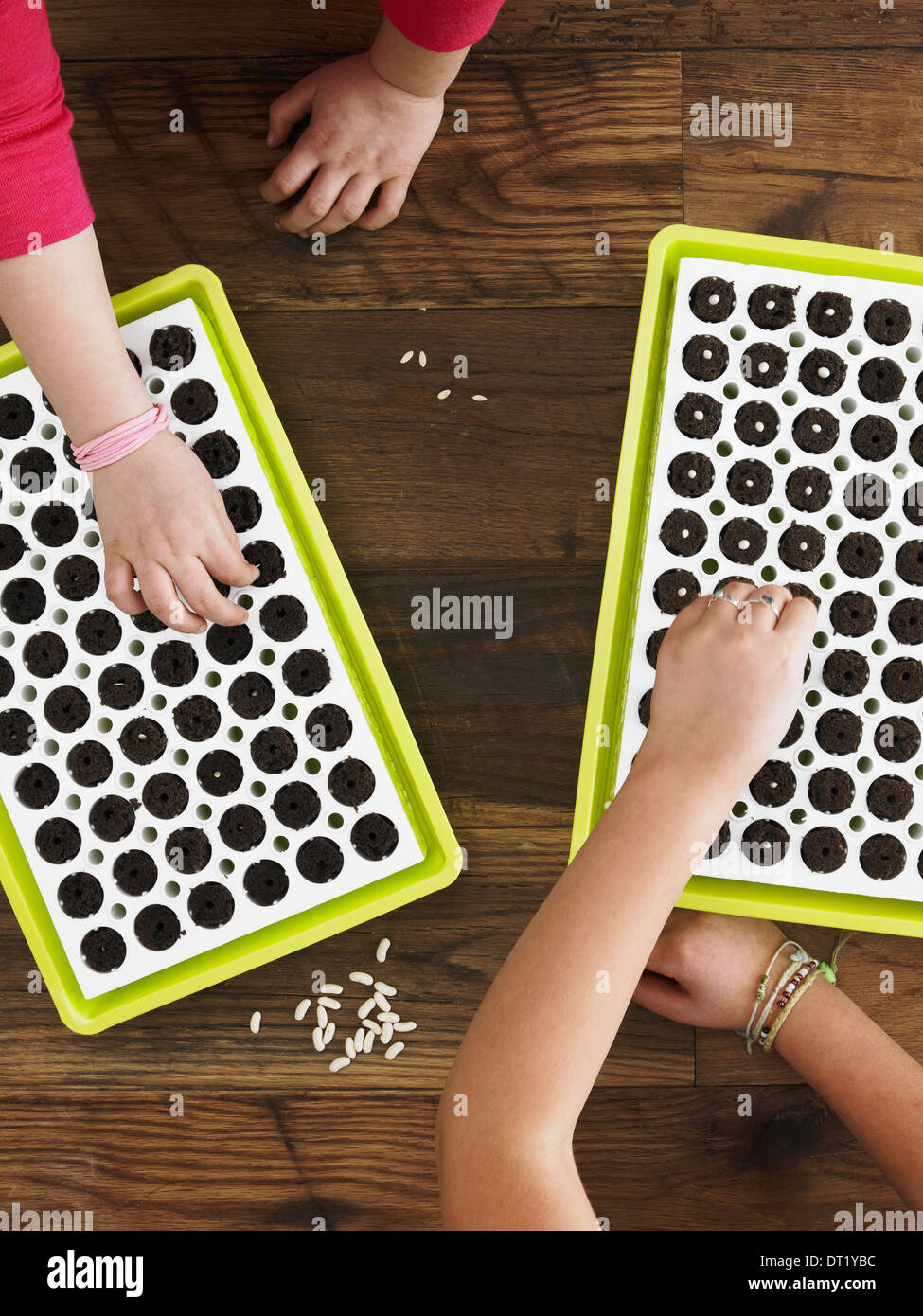 View from overhead of two children planting seeds into a seed growing tray - Stock Image