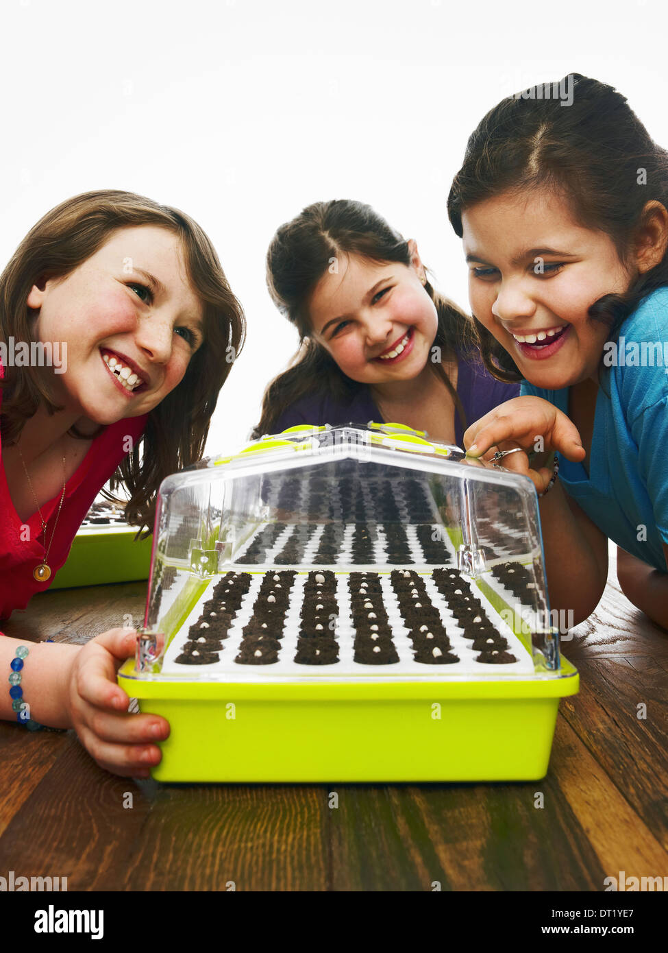 Three children leaning excitedly over a freshly planted seed tray with a cover on a table - Stock Image