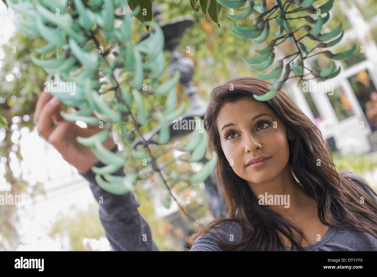 A young woman reaching up to admire a plant with blue flower petals indoor glasshouse in a botanical garden in New - Stock Image