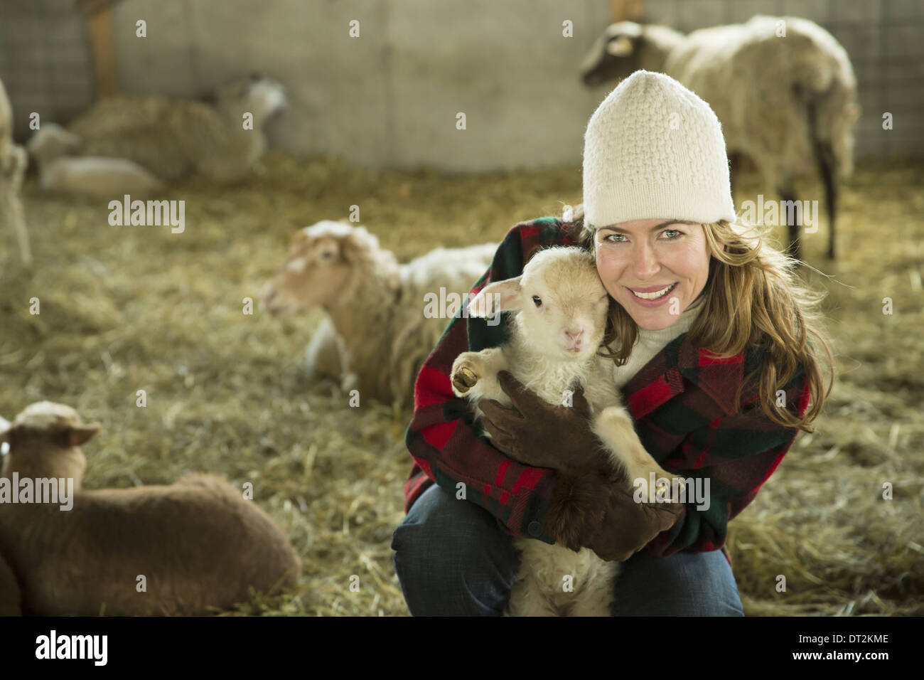 An Organic Farm in Winter in Cold Spring New York State A family working caring for the livestock A woman holding - Stock Image