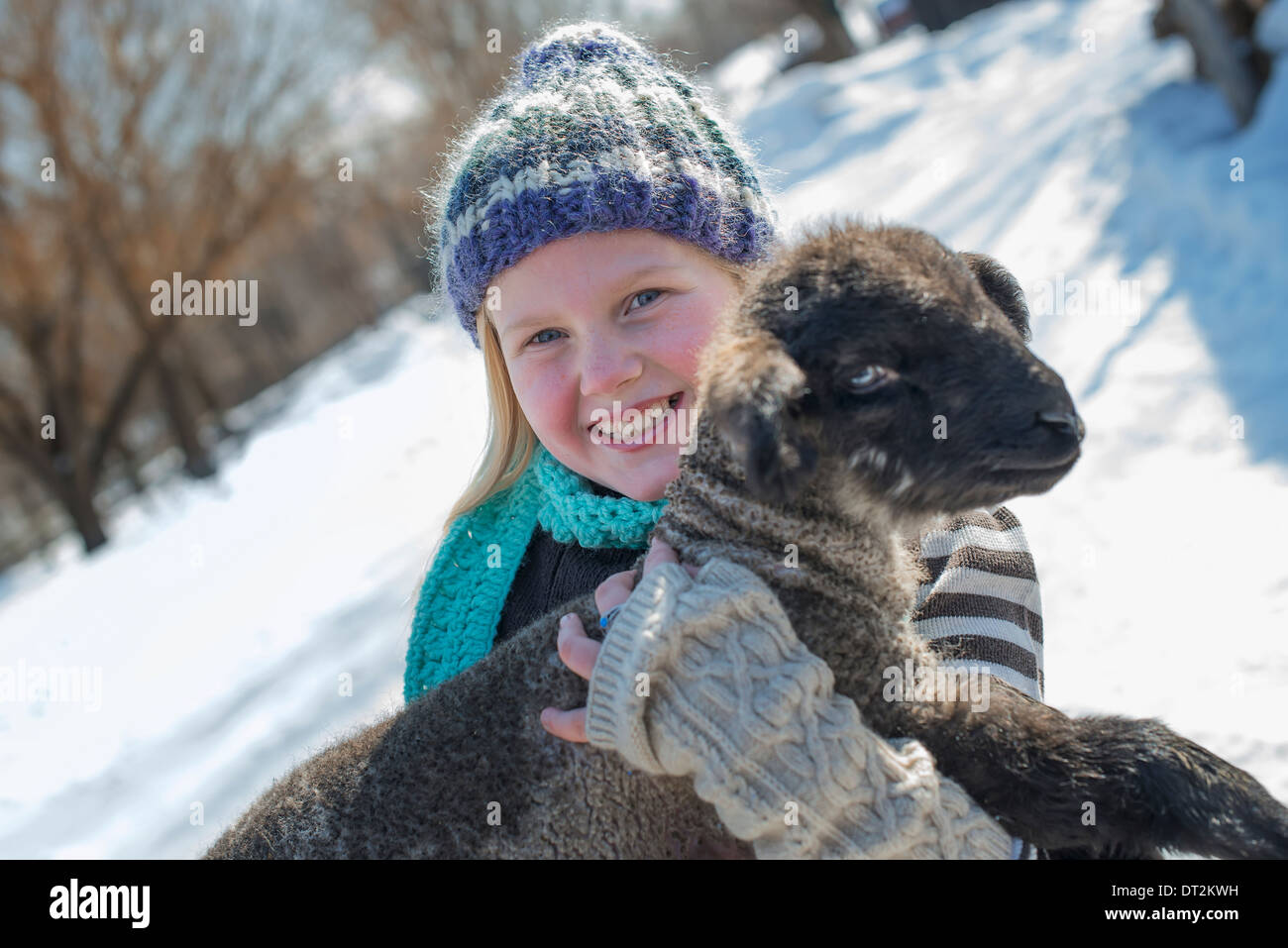 Winter scenery with snow on the ground A young girl holding a young lamb - Stock Image
