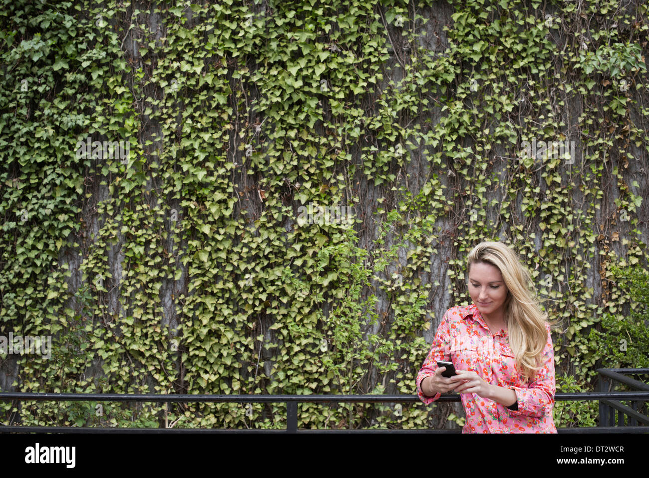 Spring City park with a wall covered in climbing plants and ivy A young blonde haired woman checking her smart phone - Stock Image