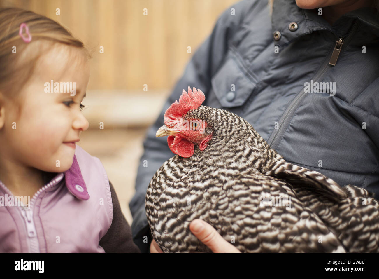 A woman holding a black and white chicken with a red coxcomb A young girl beside her holding closely at the chicken - Stock Image