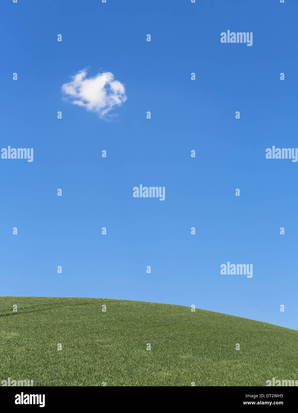 A delicate small cloud high in the sky over field of lush green wheat near Pullman - Stock Image