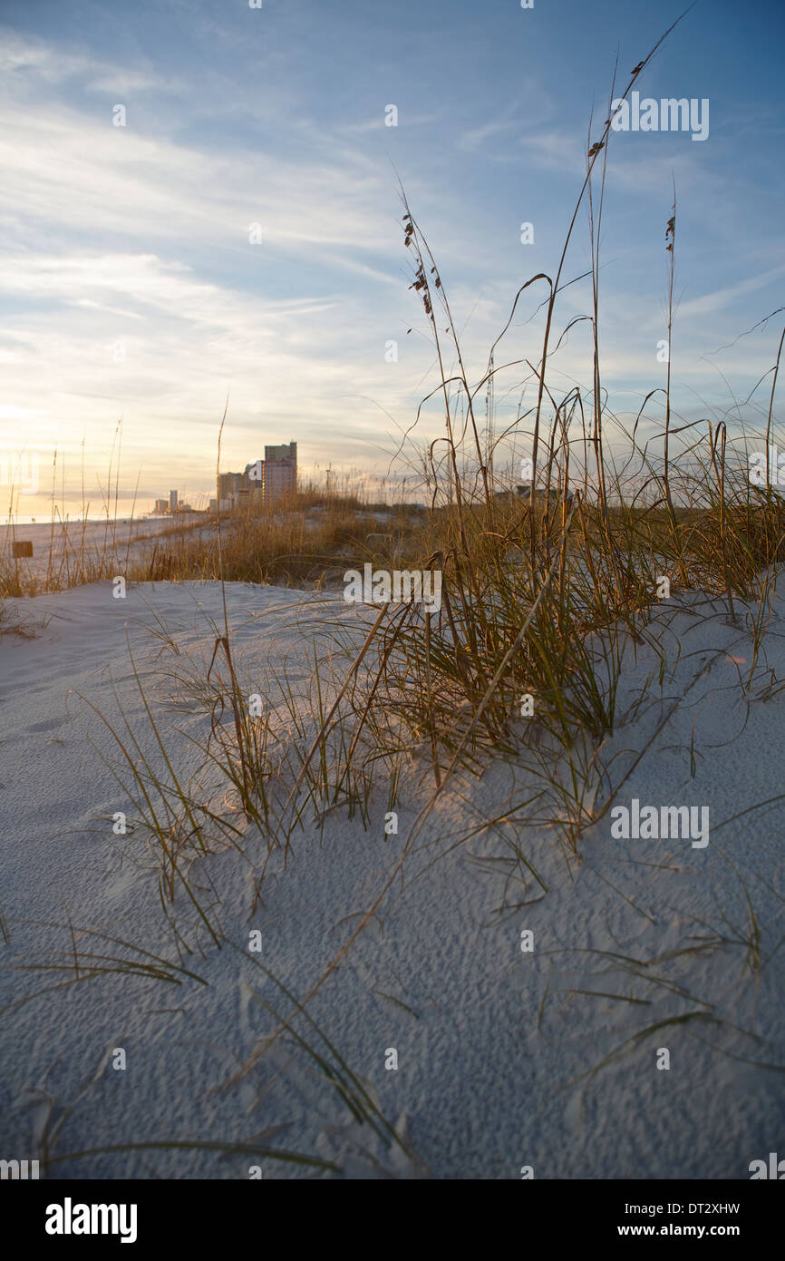 Dune grass on the beach in Gulf Shores, Alabama - Stock Image