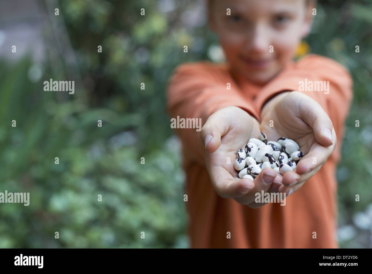 A young boy holding out a handful of dried beans - Stock Image