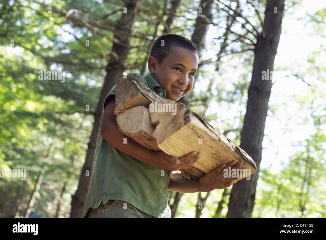 Summer A boy carrying firewood through the woods - Stock Image