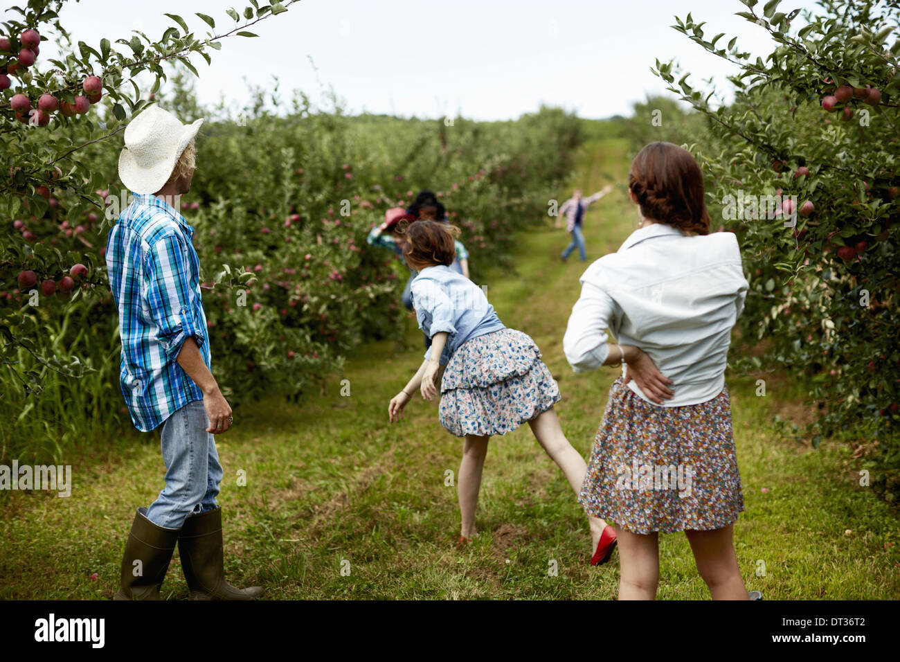 Rows of fruit trees in an organic orchard A man and three young women throwing fruit at each other - Stock Image