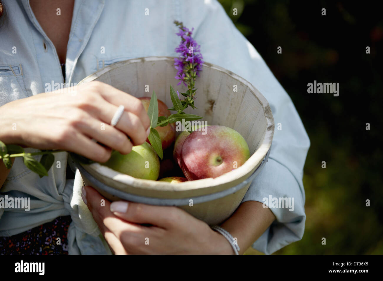 A woman holding a pottery bowl with fresh picked apples and a small foxglove flower - Stock Image