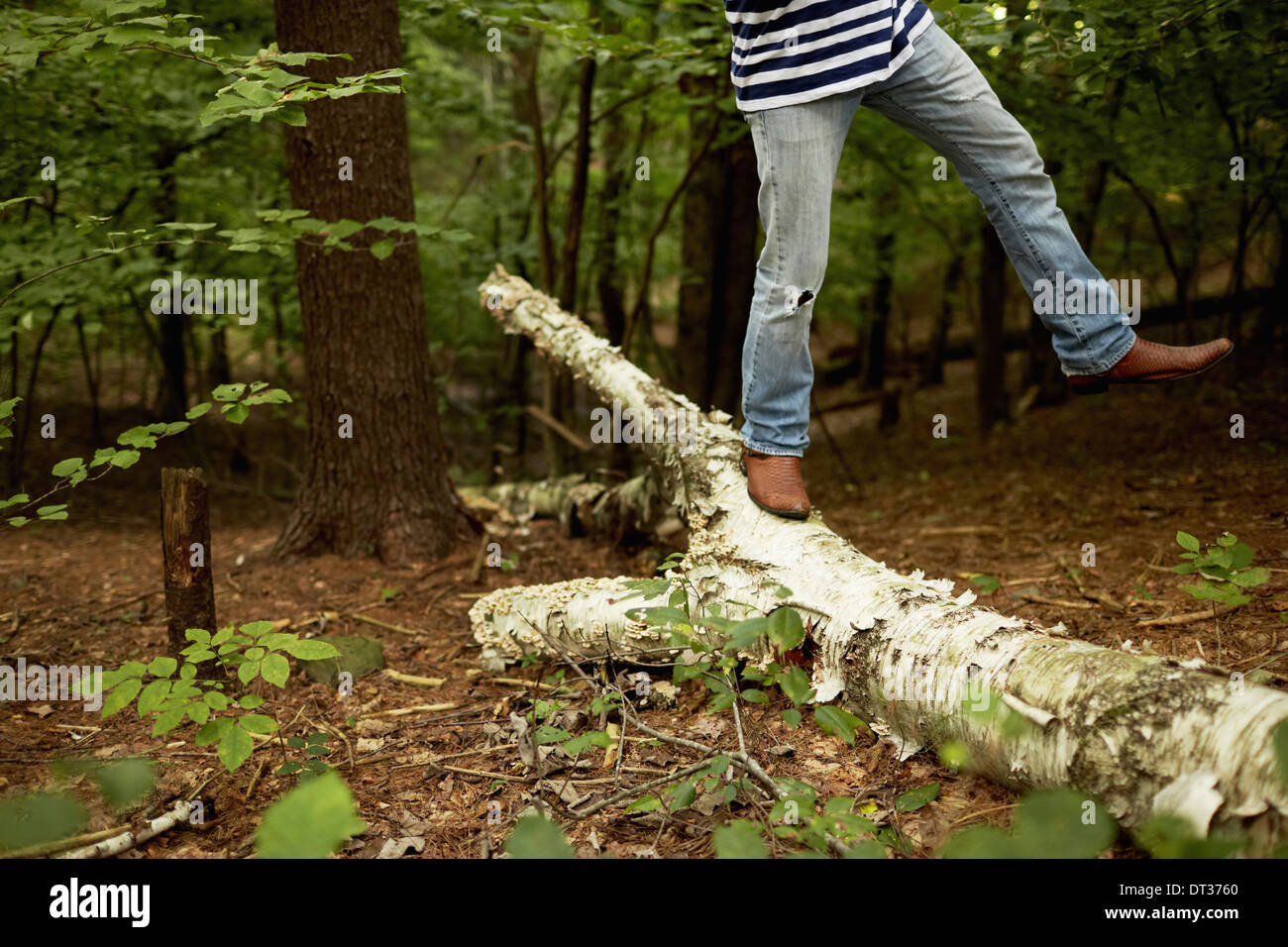 man walking along a fallen tree trunk in the woods balancing - Stock Image