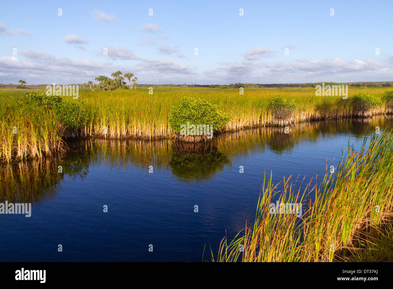 Everglades Florida Big Cypress National Preserve Tamiami Trail US 41 sawgrass palm tree hammock water mangrove - Stock Image