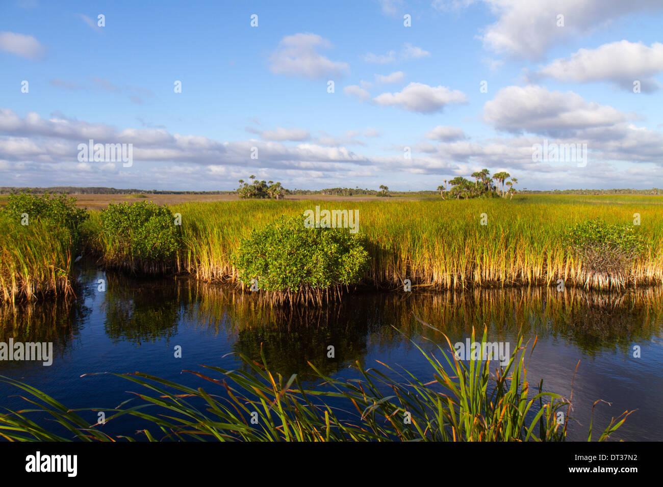 Everglades Florida Big Cypress National Preserve Tamiami Trail US 41 sawgrass palm tree hammock water mangrove Stock Photo
