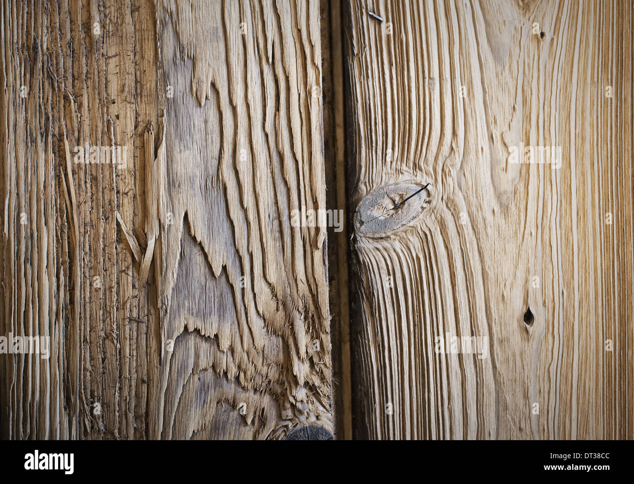 A reclaimed lumber workshop. Close up of two planks of wood, with knots and wood grain patterns. - Stock Image