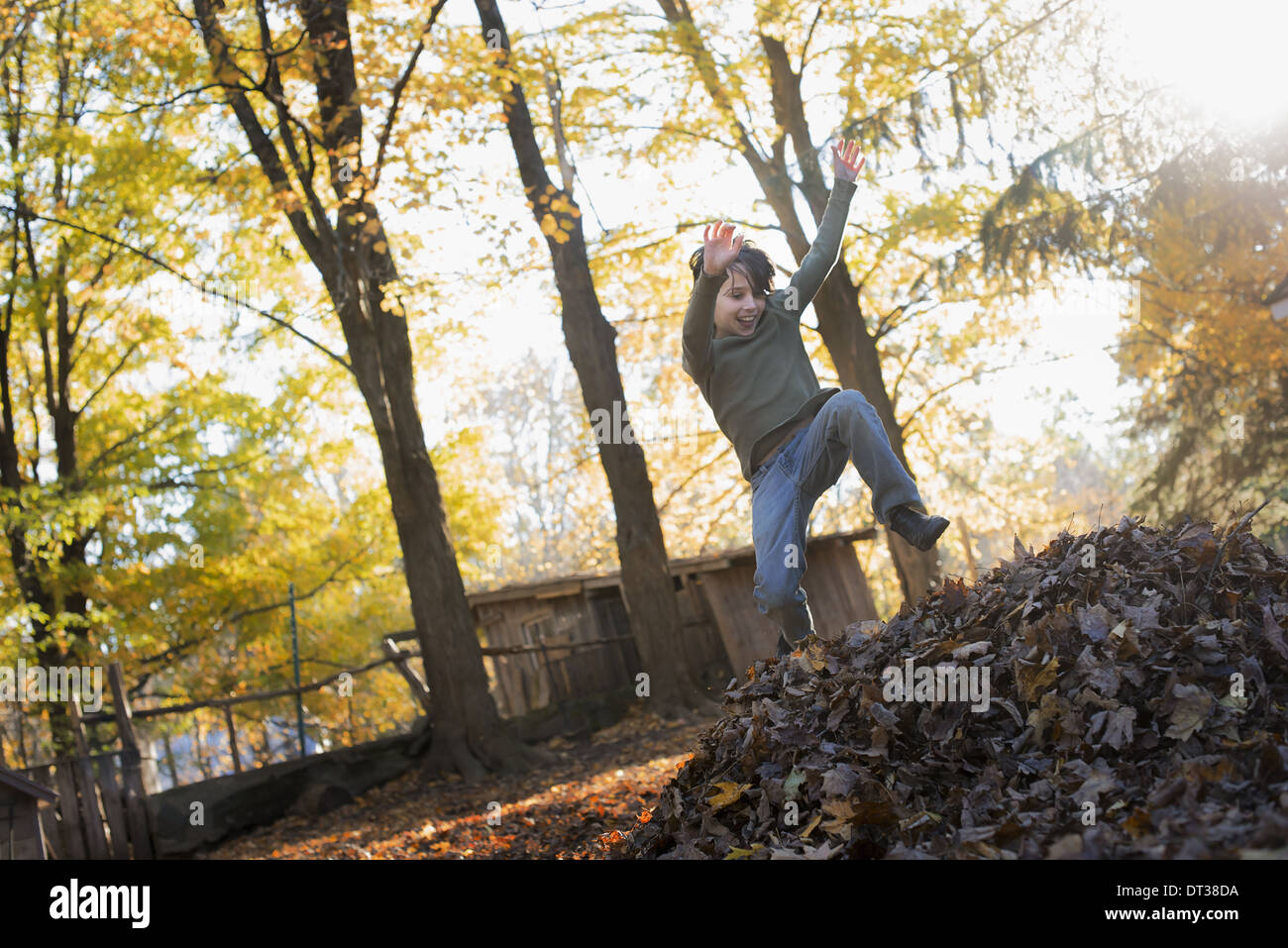 A child in autumn sunshine in a woodland. Leaping into a large pile of raked up autumn leaves. - Stock Image