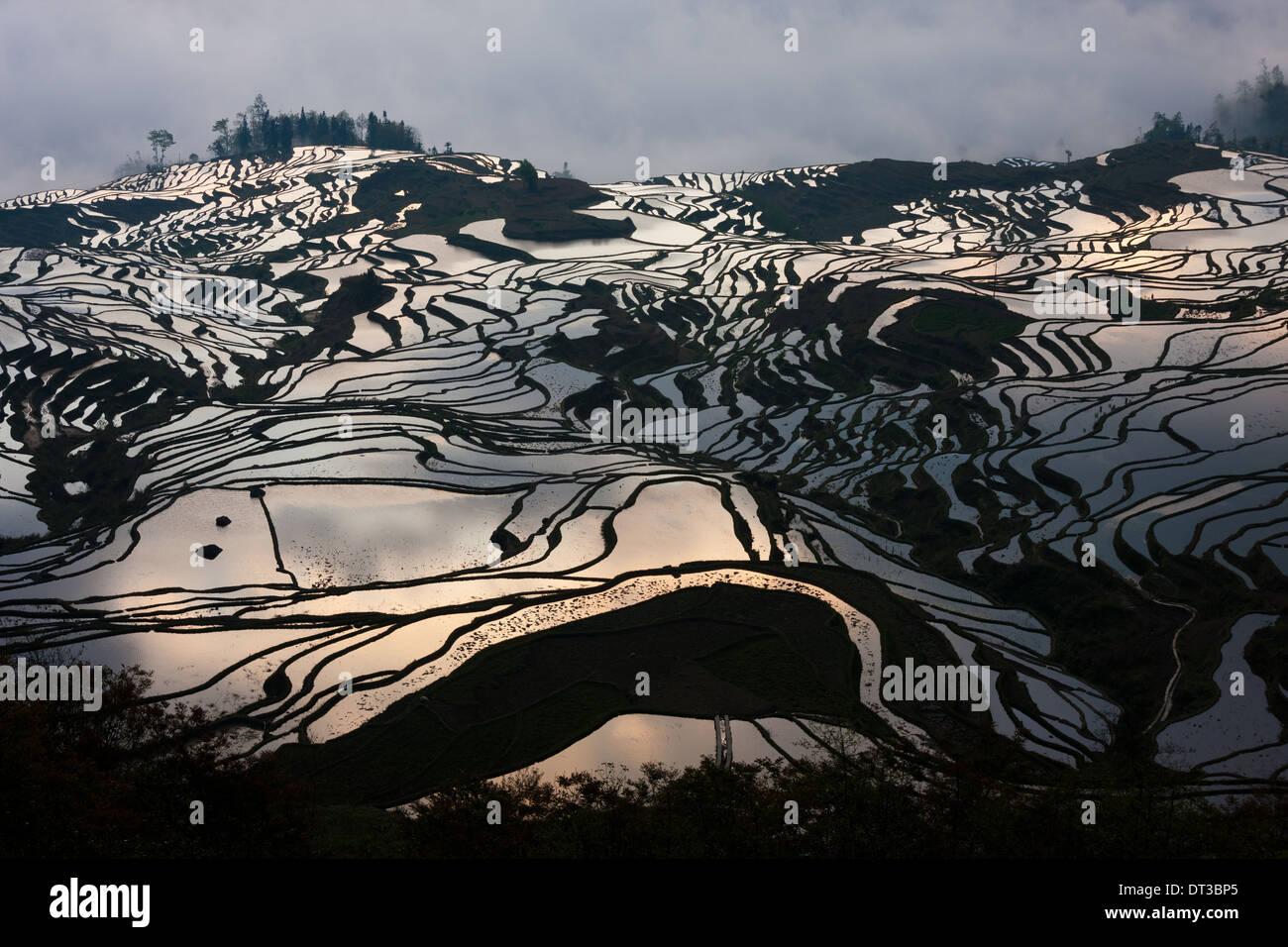 Terraced rice fields, Yuanyang, China - Stock Image