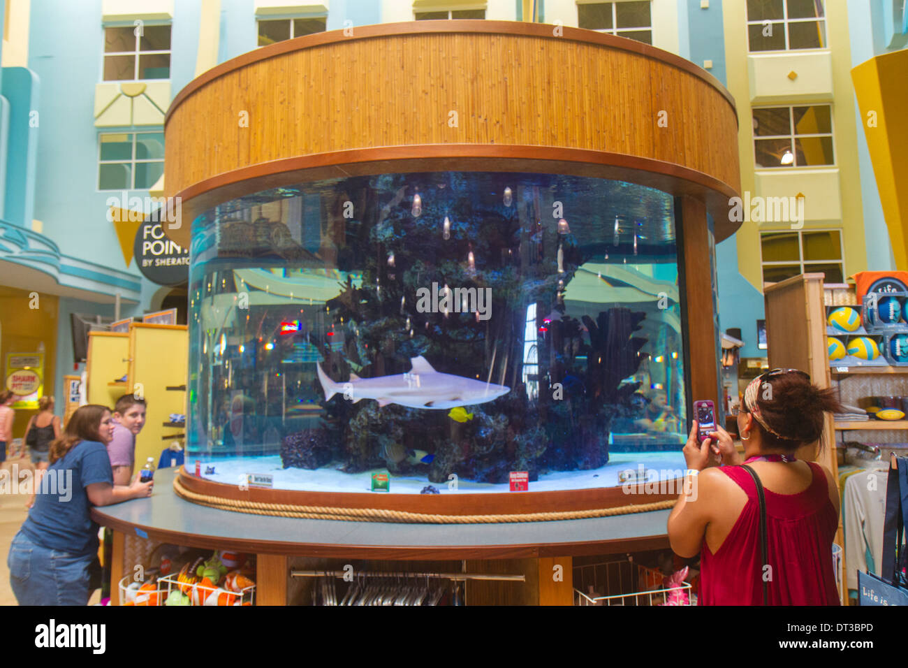 COCOA BEACH SURF COMPANY HAS EVERYTHING FOR FUN IN THE SUN And the Shark Pit Bar & Grill with it's gallon Shark & Exotic Fish Tank with it's hand fed sharks is where the locals eat (ask the Sharks). Beach Rentals?Every kind of surfboard, bodyboard, beach umbrellas, beach .