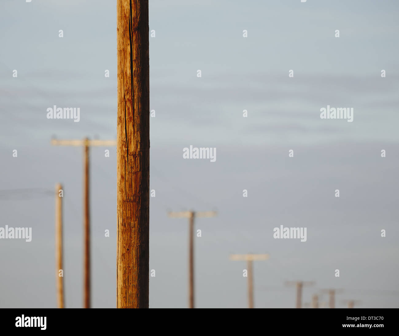 Telephone poles and power lines in a row, at Belridge in California. - Stock Image