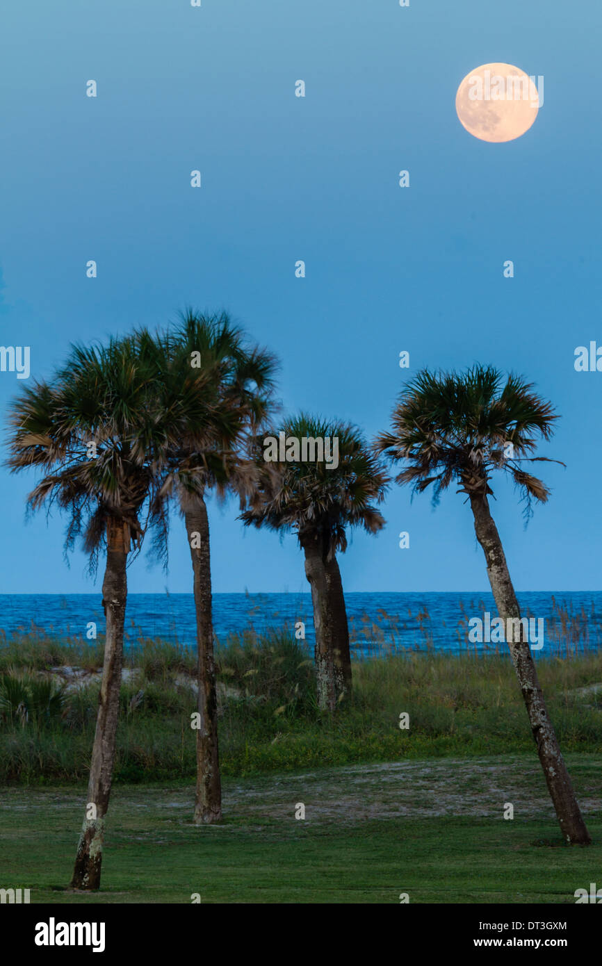 Full moon rising over the ocean and palm trees in Florida. - Stock Image