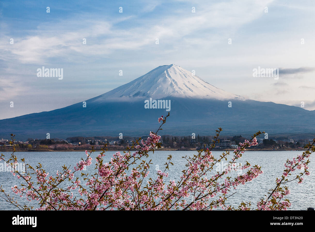 Nice and beautiful scenery of mount Fuji and pink cherry blossoms in spring time, Japan - Stock Image