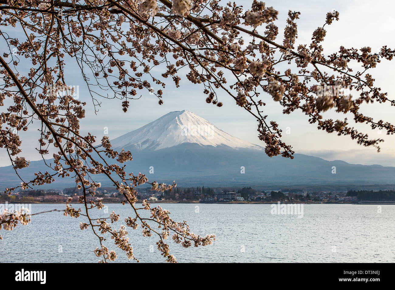 Nice and beautiful scenery of mount Fuji and cherry blossoms in spring time, Japan - Stock Image