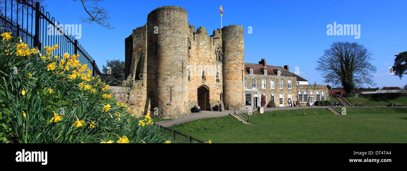 Spring Daffodil flowers on the green of Tonbridge Castle; Tonbridge town; Kent; England; UK - Stock Image