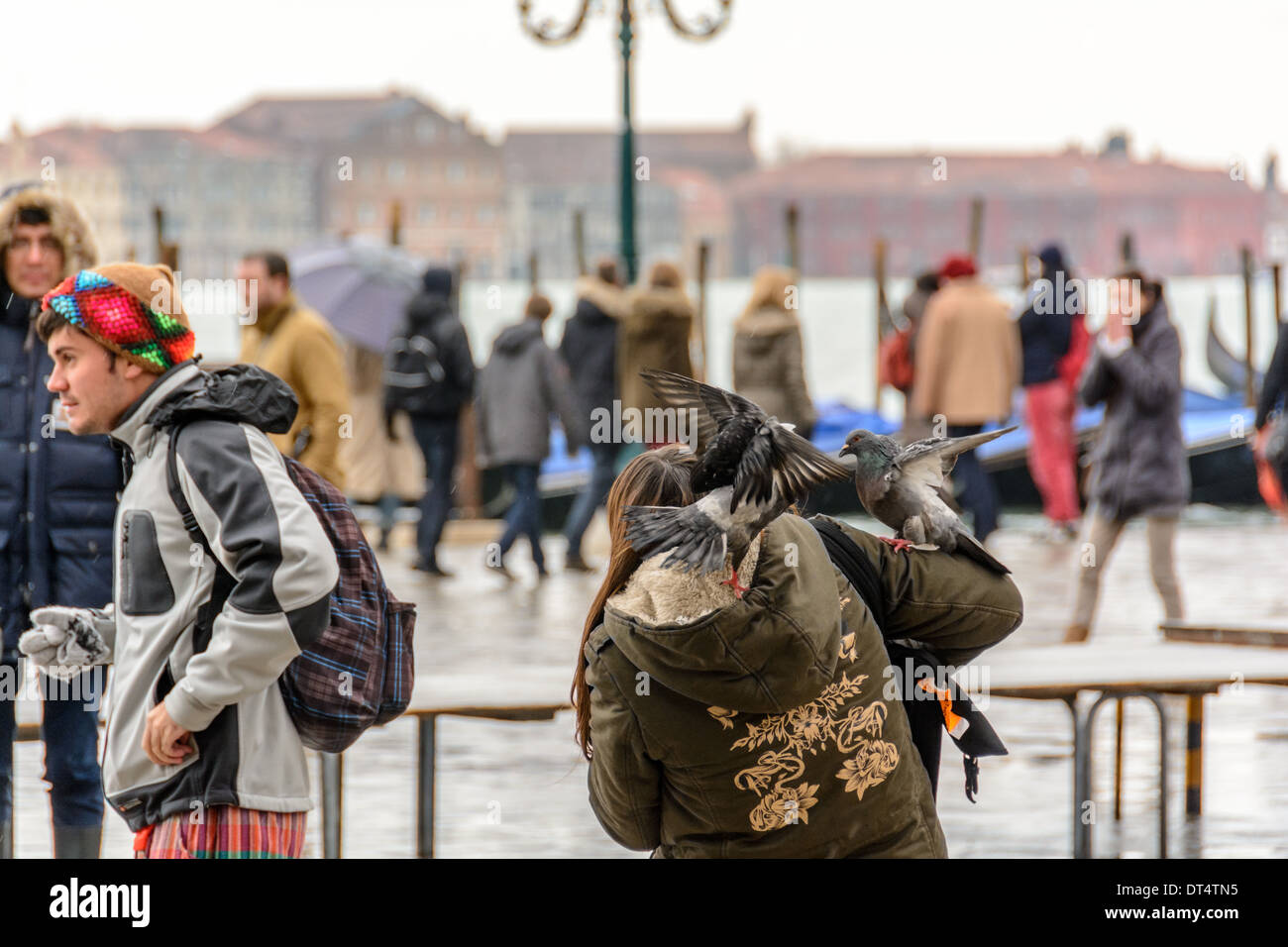 Venice, Italy. Pigeons, doves of St Mark´s Square landing on arm and shoulder of a young woman. Stock Photo