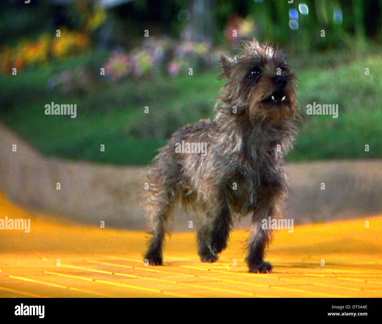 Dog In Wizard Of Oz Name