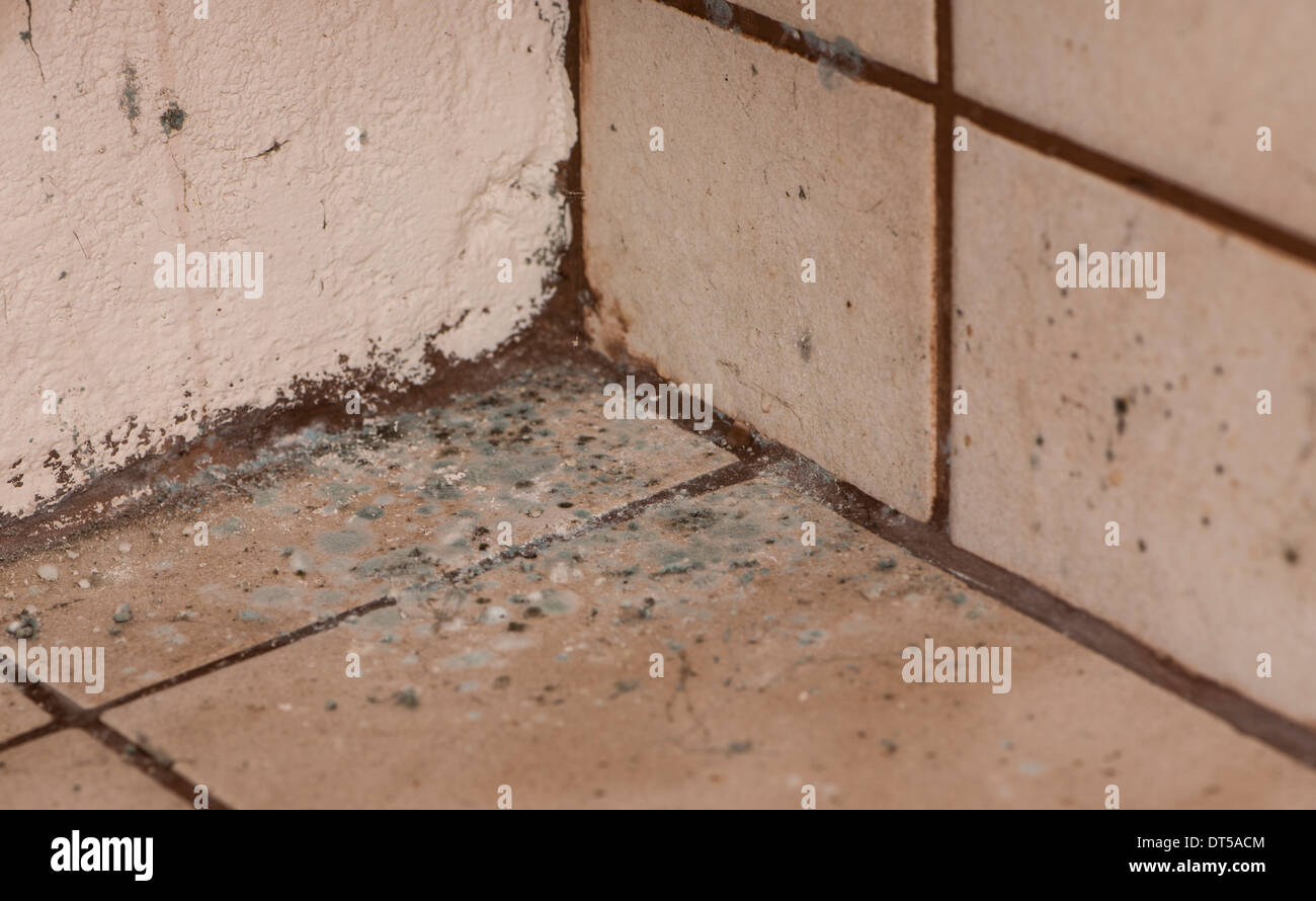 Mildewed walls with different sorts of mold (close-up shot) - Stock Image