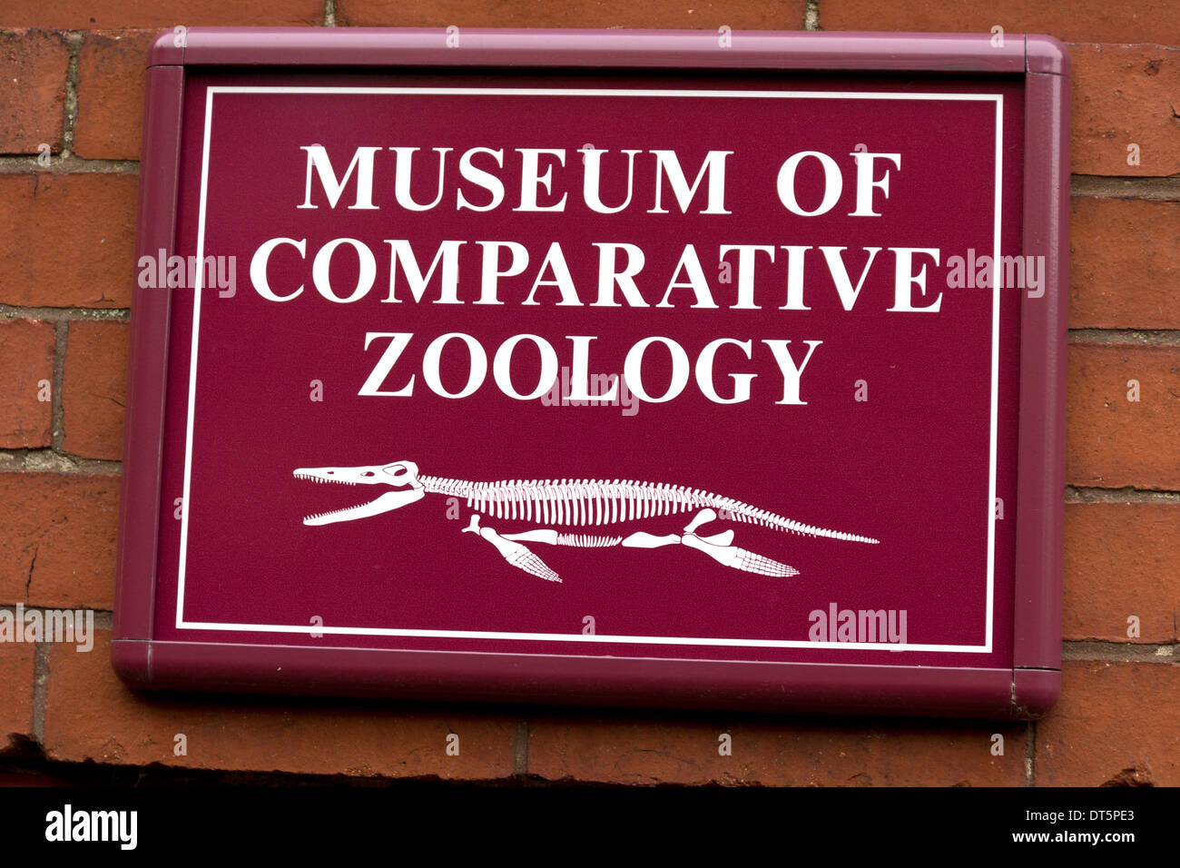 Sign for Museum of Comparative Zoology at Harvard University, Boston, Massachusetts, USA - Stock Image
