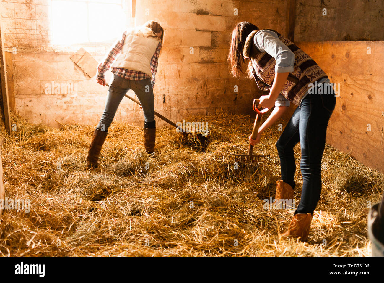 Two young women making straw bed in stable - Stock Image