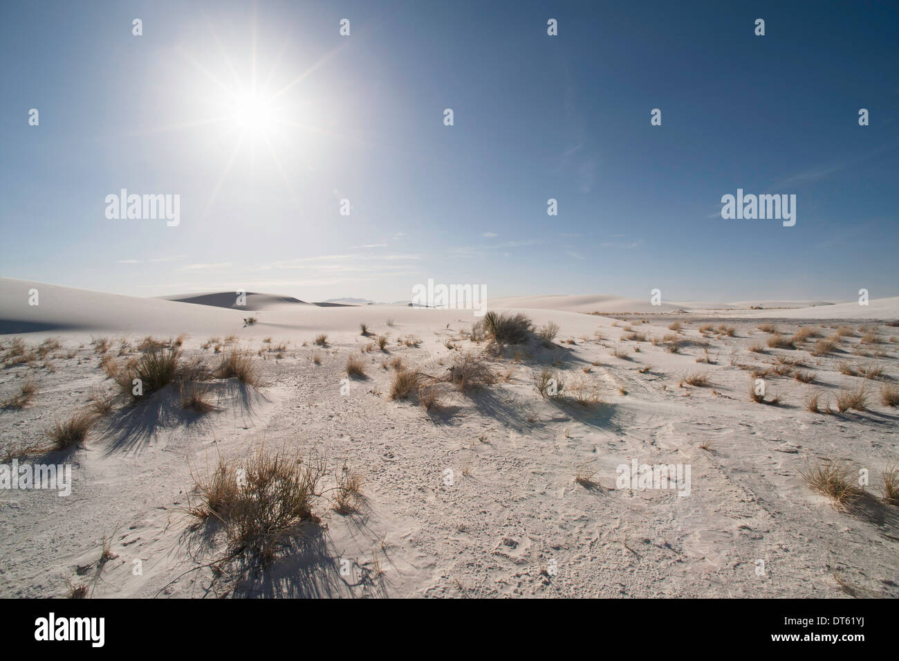 Sand dune and shrubs, White sands, New Mexico, USA - Stock Image