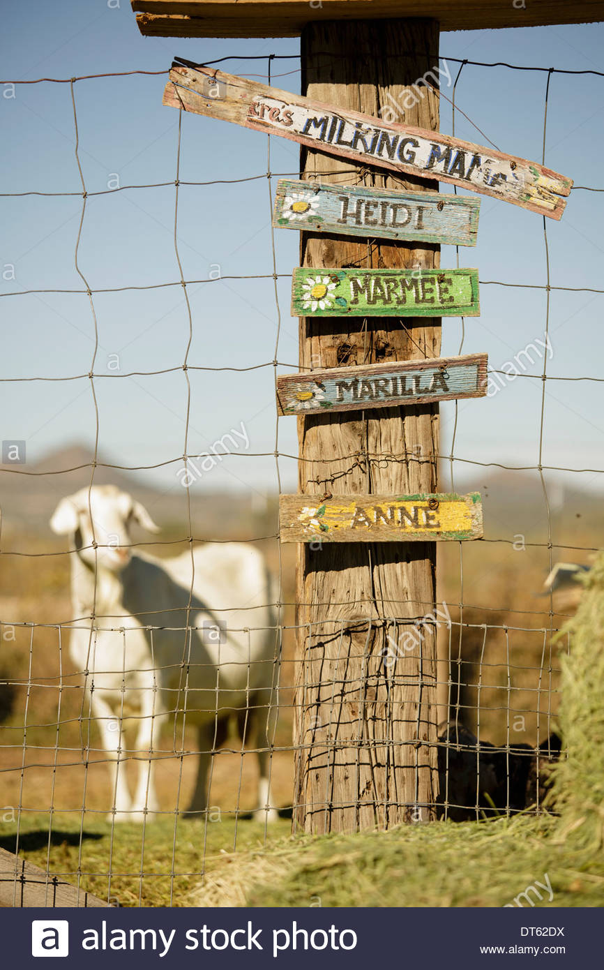 Signs with goats names, goat in background - Stock Image