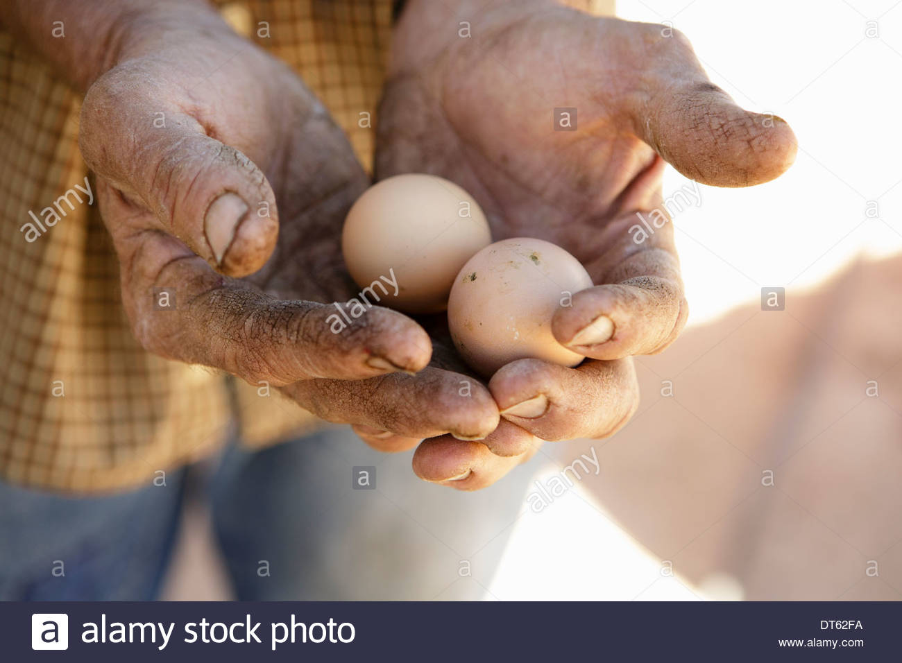 Farmer holding two eggs - Stock Image