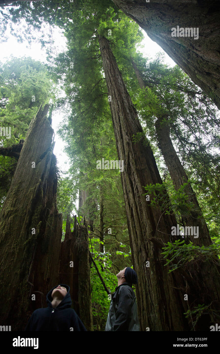 Father and son looking up, Redwoods National Park, California, USA - Stock Image