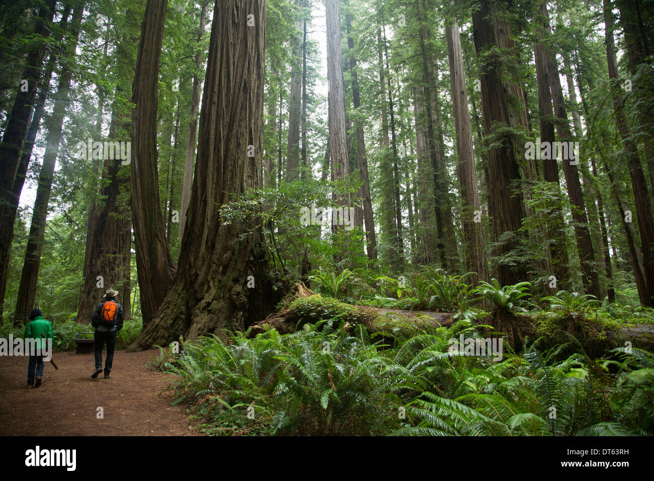 Father and son in Redwoods National Park, California, USA - Stock Image