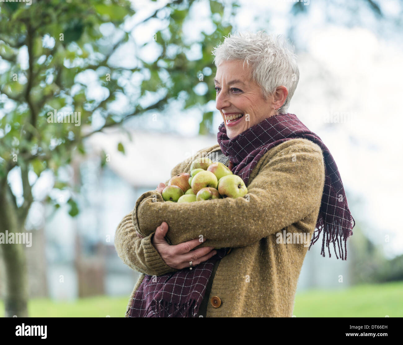 Happy senior woman with armful of apples - Stock Image