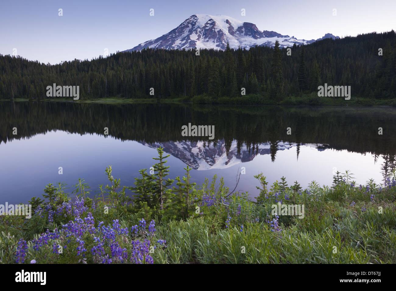 Mount Rainier, a snowcapped peak in Washington, USA - Stock Image