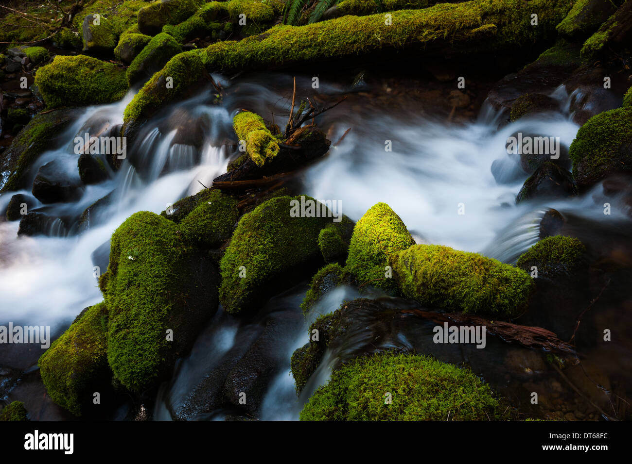 Barnes Creek with water flowing over mossy rocks in Olympic National Park, Washington, USA - Stock Image