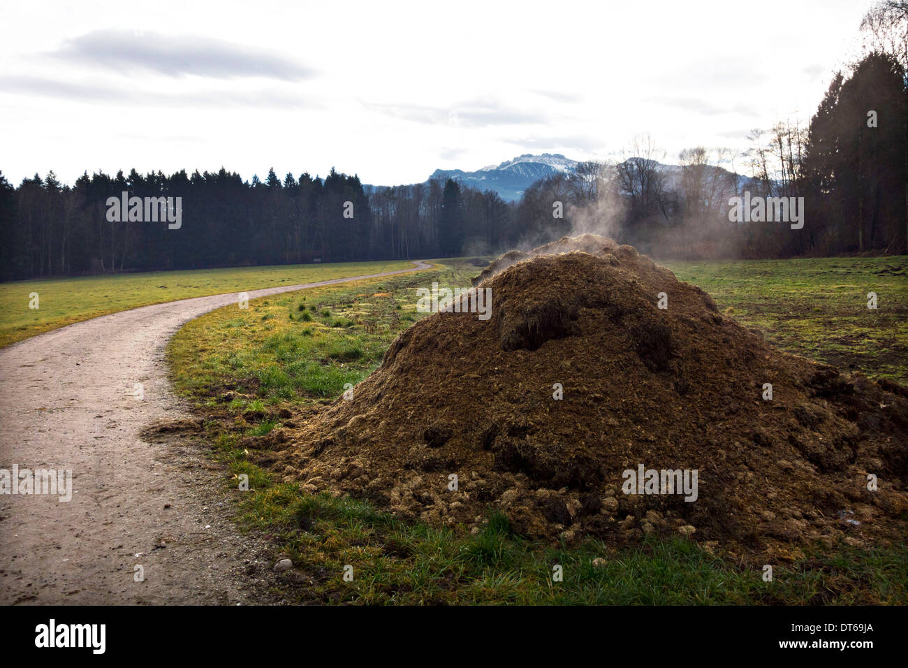 Methane gas escaping from stockpile of cow manure and waste, Chiemgau, Upper Bavaria, Germany Europe - Stock Image