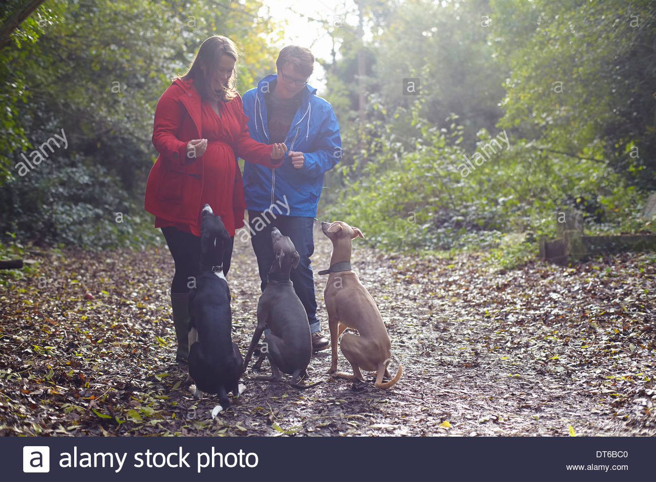 Young couple and their three obedient whippets in woods - Stock Image