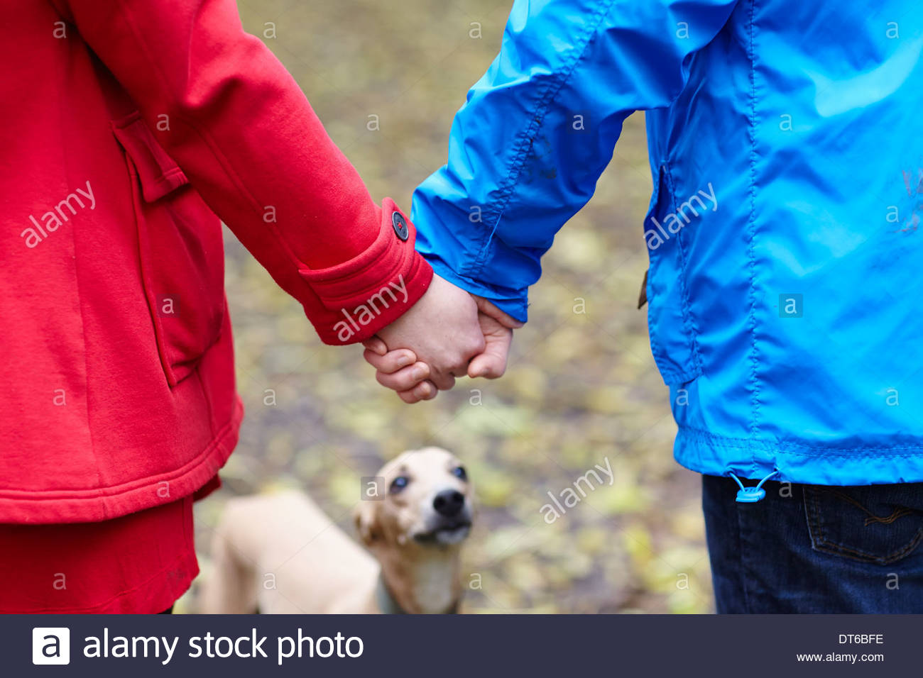 Cropped image of young couple and whippet - Stock Image