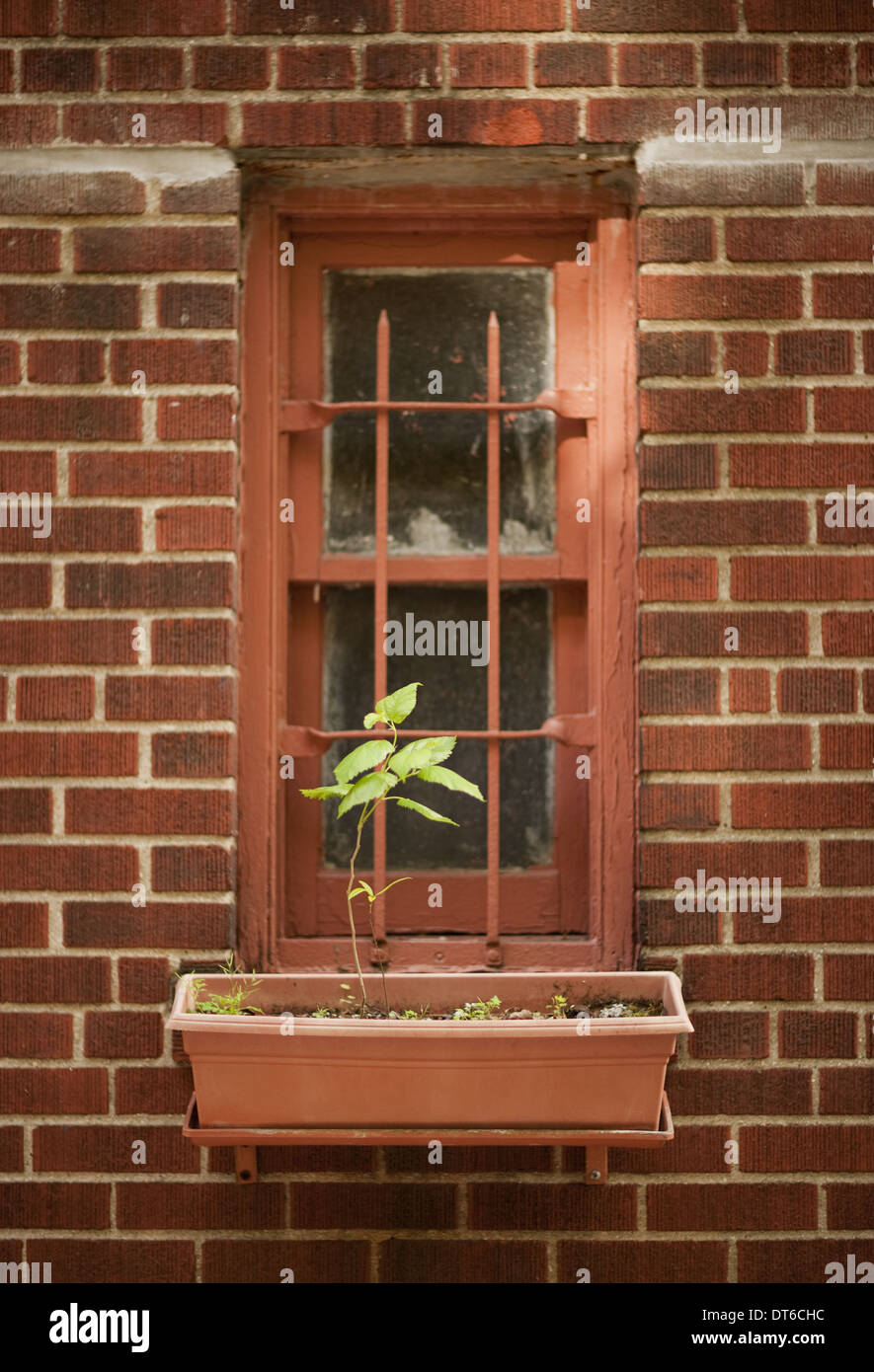 The exterior wall of a city apartment building in New York, a narrow window with a single plant in a windowbox. - Stock Image